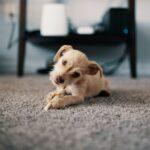 Laminate Flooring vs Carpet: Which Should You Choose?