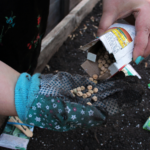 Make Your Garden Sustainable: Tips on Where to Buy Organic Seeds